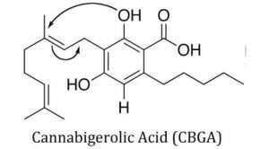 Cannabigerolic Acid CBGA